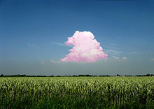 Peter Coffin (Pink Cloud)
